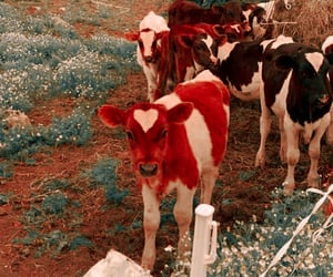 animal, cows, and cottagecore image