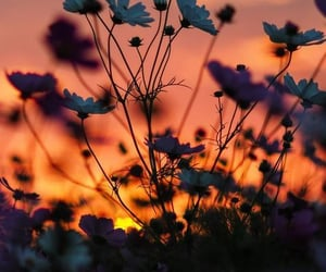 aesthetic, sunset, and colourful image