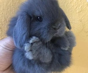 adorable, animal, and bunny image