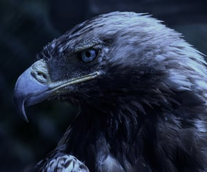 aesthetic, blue, and eagle image