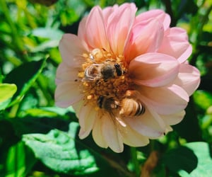 aesthetics, authentic, and bee image
