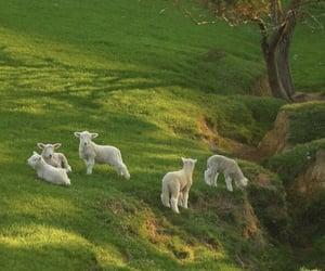 nature, sheep, and animal image