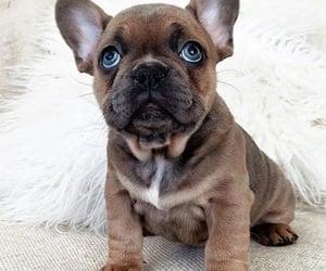animals, dog, and luxury image