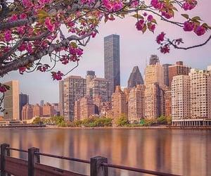 new york and usa image