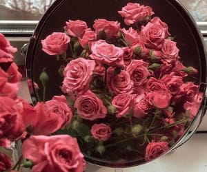 flowers, pink, and surprise image