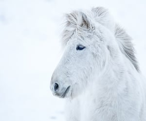 animals, beautiful, and photography image