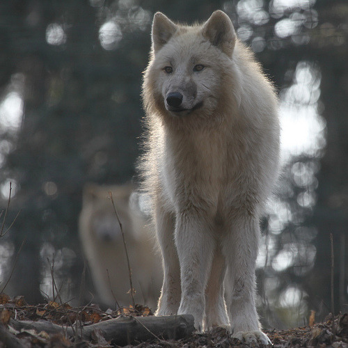 animals, beautiful, and forest image