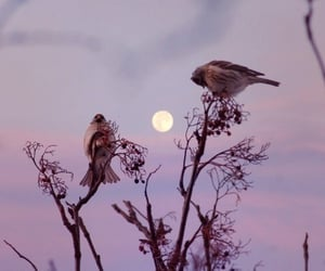 bird, sky, and moon image