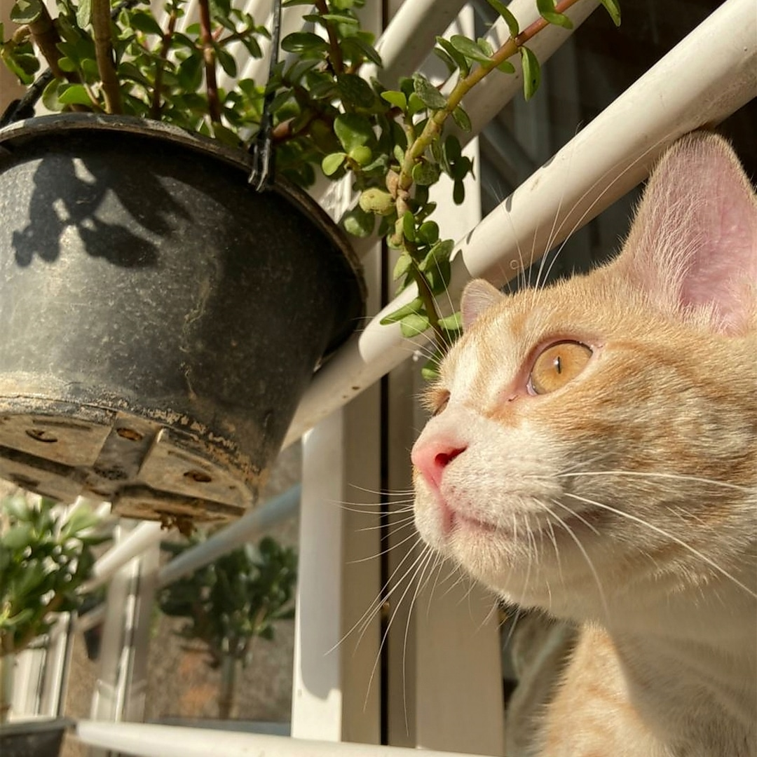animals, cat, and قطّ image