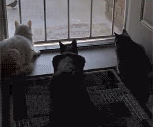 adorable, cat, and funny image