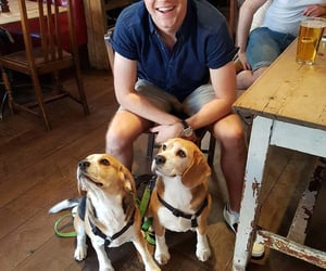 happy, puppies, and niall horan image