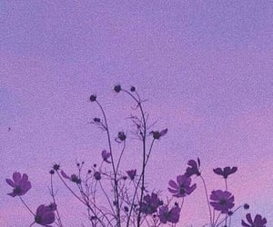 flowers, purple, and aesthetic image