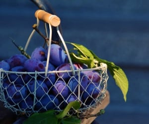 basket, plums, and purple image