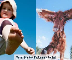 photography and photography contest image