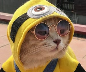 fashion, cute, and cat image