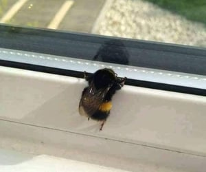 bee, lovely, and cute image