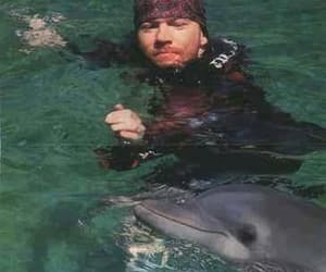 animal, axl rose, and dolphin image