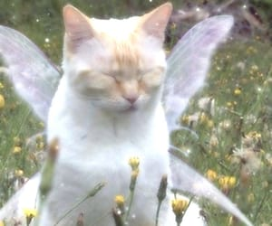cat, animal, and fairy image