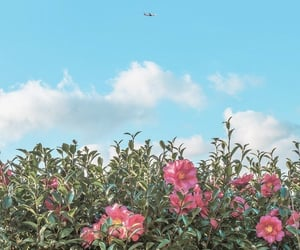 sky, spring, and airplane image