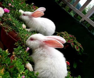 care, smile, and bunny image