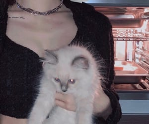 aesthetic, cat, and edgy image