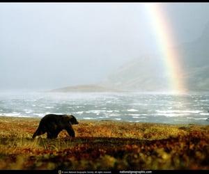 1978, alaska, and alaskan brown bear image