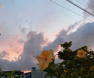 autoral, morning, and nature image