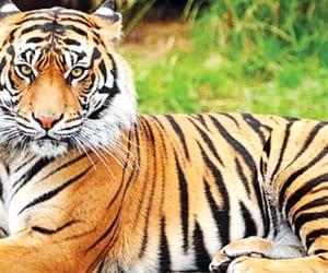 bangladesh, news, and tiger image