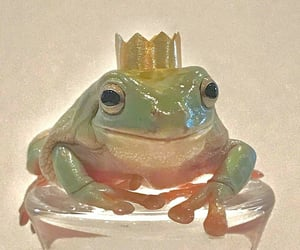 frogs image