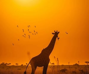 aesthetic, africa, and animal image