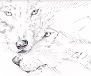 art, wolves, and drawing image