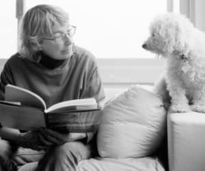 literature, poetry, and mary oliver image