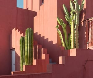 pink, architecture, and cactus image