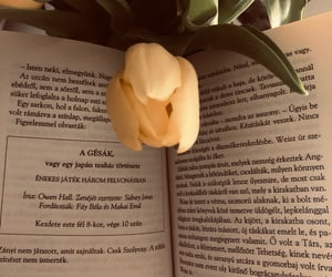 beauty, books, and flowers image