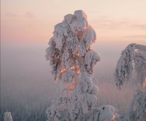 finland, forest, and frozen image