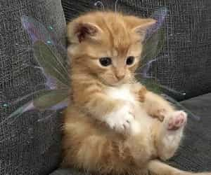 butterfly, unfiltered, and cat image