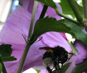 garden, petunia, and insects image