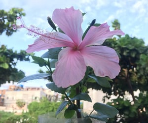 aesthetic, autoral, and flowers image
