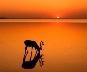 amazing, deer, and gorgeous image
