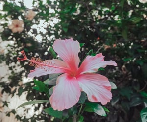 aesthetic, bloom, and autoral image