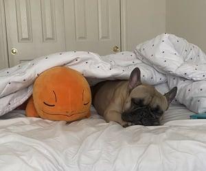 pokemon, pug, and sleeping image