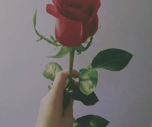 dark, flowers, and rose image