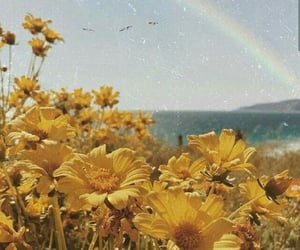 aesthetic, flowers, and sea image