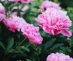 flower, spring, and beautiful summer image