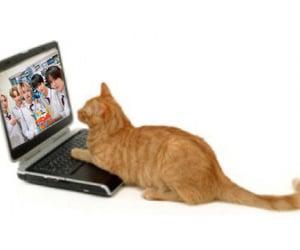cat, gato, and txt image