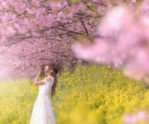 girl, spring, and 桜 image