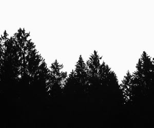 analog, forest, and trees image