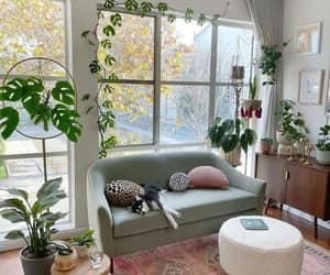 dog, interior design, and sofa image