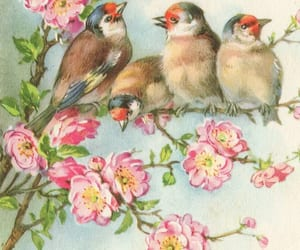 bird, floral, and pretty image