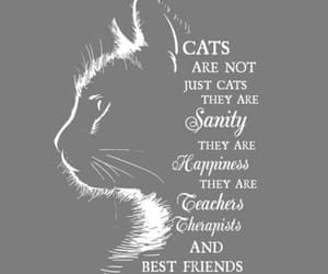 animal, bff, and cat image